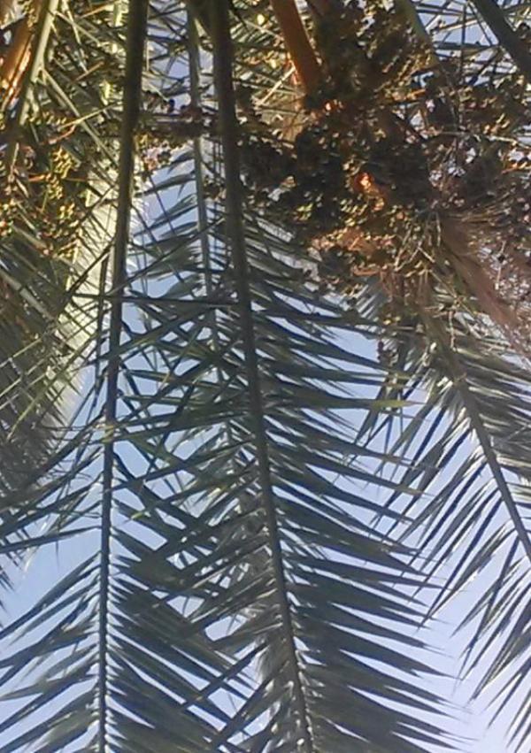 Onder de palmboom
